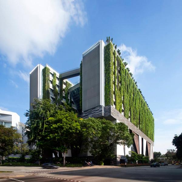 La Escuela de Artes de Singapur tienela cubierta y la fachada verde que mantiene el interior fresco y limpio.